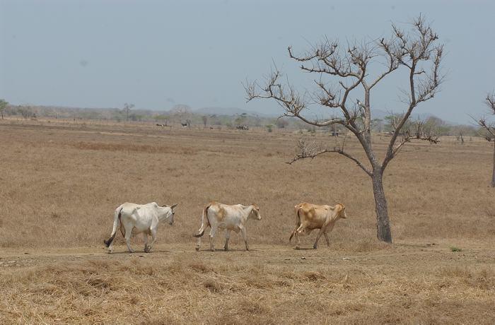 La falta de lluvias tiene azotada a la Guajira