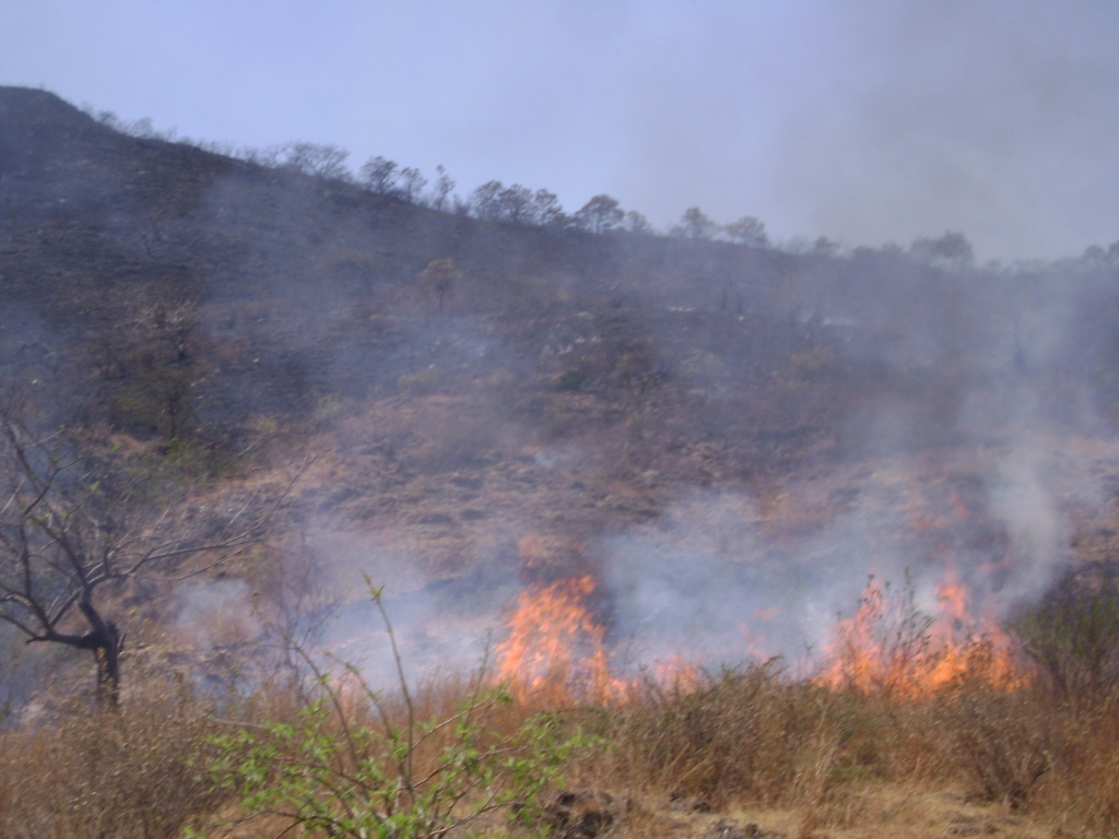 Incendio en zona rural de Cali devastó 5 hectáreas de tierra