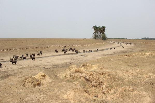 Por sequía en el país Gobierno declararía emergencia social