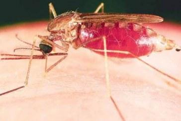 Instituto Nacional de Salud confirma llegada del chikunguña