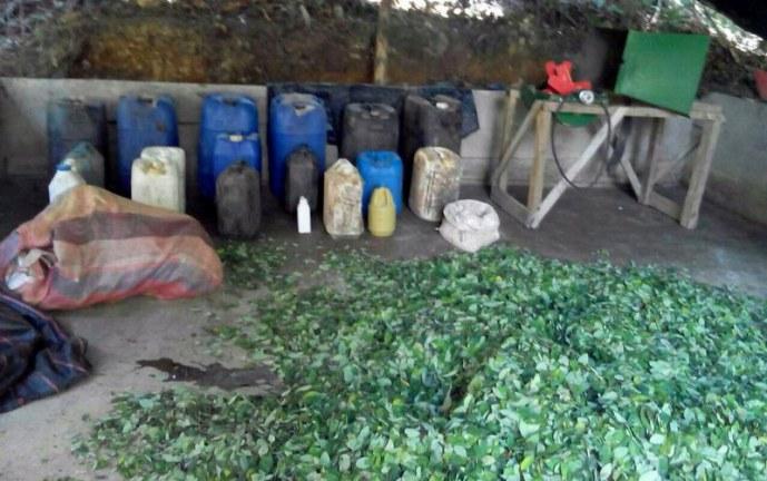 En el Cauca habrán cortes de energía por cultivos ilegales de marihuana