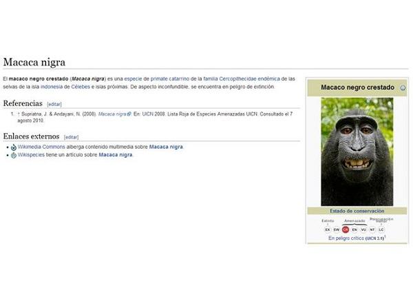 Wikipedia estaría en problemas por derechos de autor