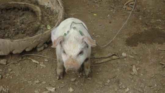 Animal de granja mata accidentalmente a menor de 15 meses