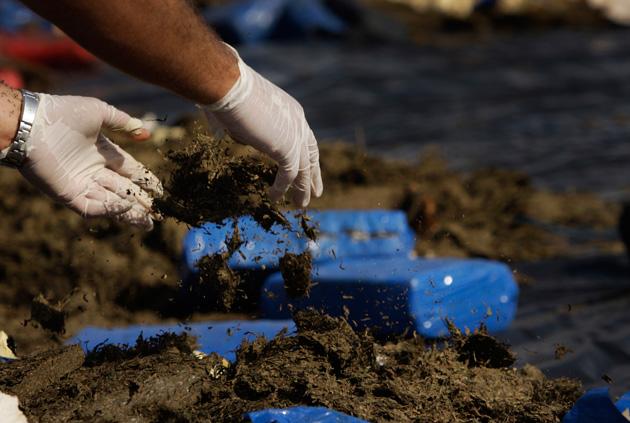Decomisan 300 kilos de marihuana en vía Florida, Candelaria