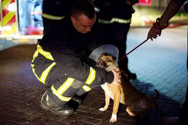 Mueren 43 perros en un incendio en Manchester, Inglaterra