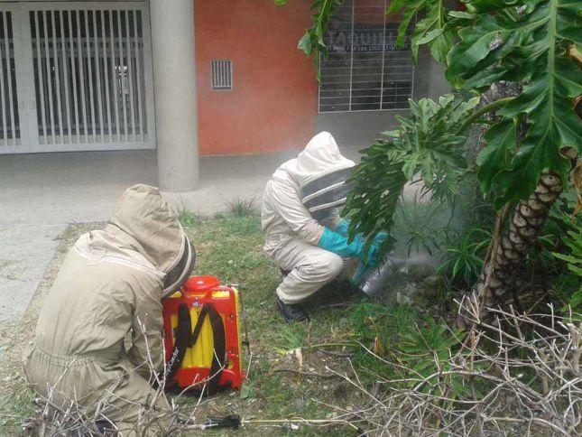 Una persona herida por ataque de abejas en el sur de Cali