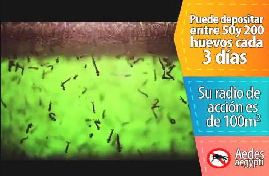 Campaña de prevención contra el virus Chikunguña