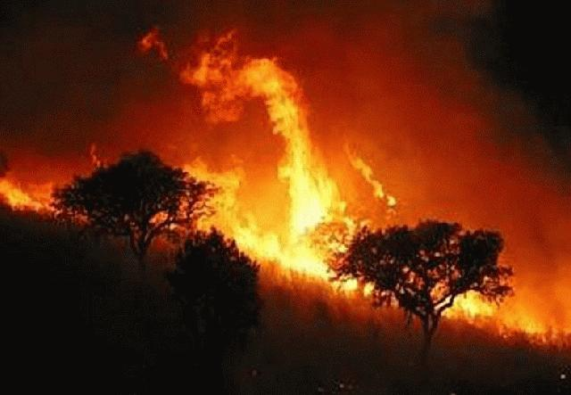 Cerca 60 de hectáreas consumió incendio forestal en Yumbo