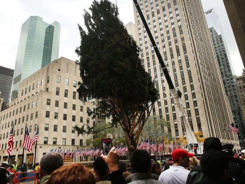 Árbol de Navidad ya está en Rockefeller para iluminar New York