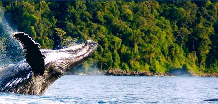 Servicios turísticos de Aviatur no continuarán en la Isla Gorgona