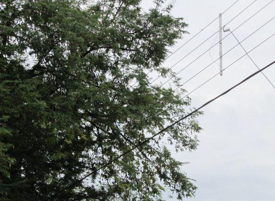 Habitantes de Altos de Nápoles denuncian fallas en servicio eléctrico