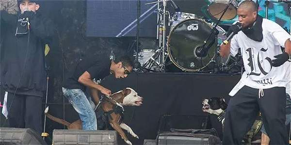 Rechazan espectáculo con pitbulls en Festival Convivencia Rock