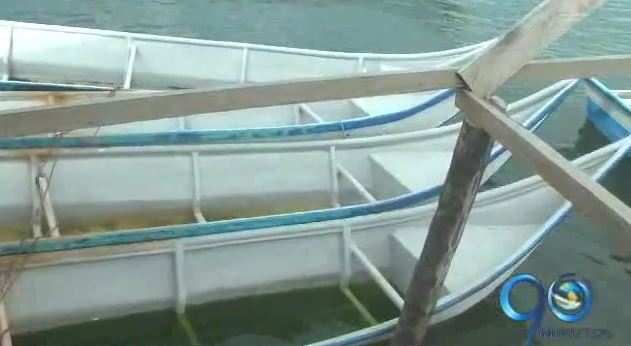 Pescadores de Tumaco reclaman alternativas ante veda de camarón