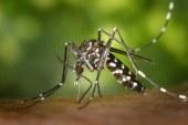 Vacaciones aumentarán casos de chikunguña: Minsalud
