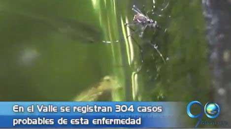 La mitad de los municipios del Valle han reportado casos de Chikunguña
