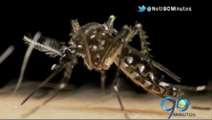 Preocupante aumento de casos de chikunguña en el Valle