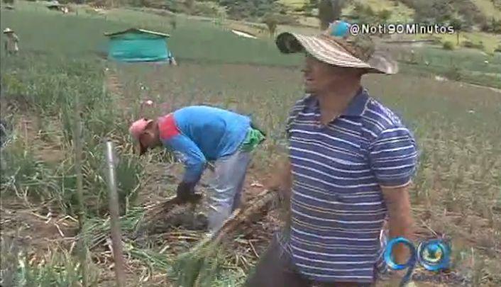 Tenerife, corregimiento que con agricultura borra las cicatrices del conflicto