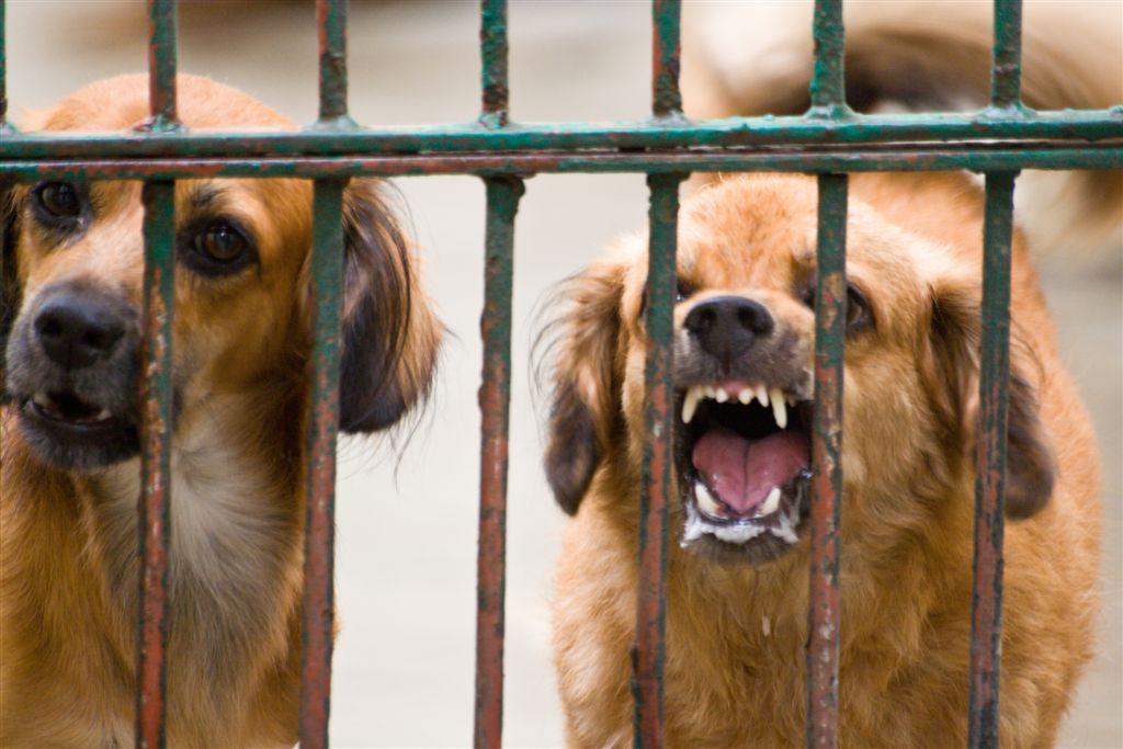 En casi el 50% aumentó número de ataques de perros en el Valle
