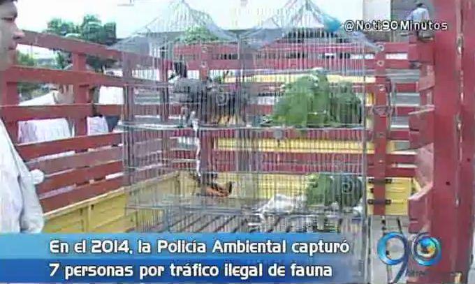Traficantes de fauna silvestre utilizan las redes sociales para venta ilegal
