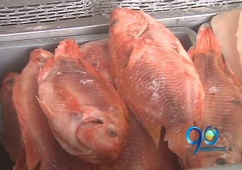 ¿Sabe cómo comprar pescado en Semana Santa?