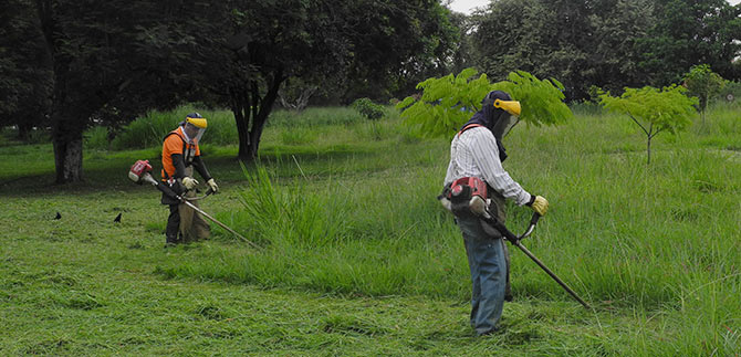 En 2016 los caleños pagarán por la poda de las zonas verdes