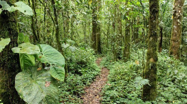 Presentan el primer inventario de plantas en Colombia
