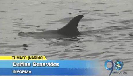 Delfín herido se varó durante cuatro horas en una playa cerca de Tumaco