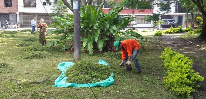 Esta semana Dagma podará zonas verdes en 85 puntos de la ciudad