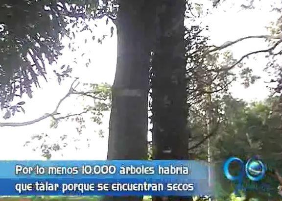 En Cali serán intervenidos 10 mil árboles