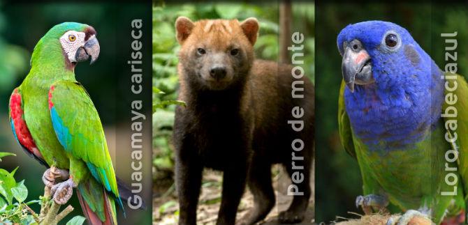 Dagma liberará diferentes especies de fauna silvestre en Los Farallones