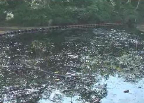 Atentado a oleoducto en Nariño contaminó a 5 ríos de la región