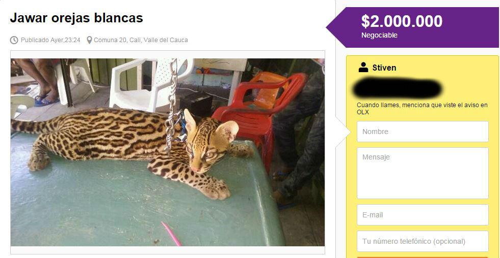Ofrecen a la venta especie salvaje a través de internet