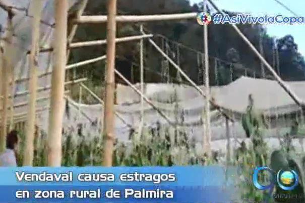Vendaval arrasó con cultivos de Vallenpaz en zona rural de Palmira