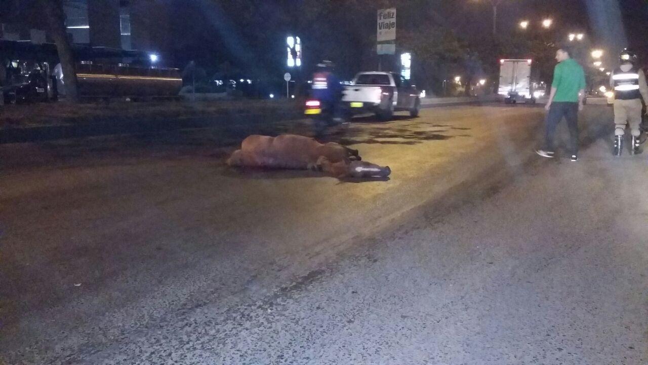 Accidente de tránsito deja un caballo muerto y una persona herida