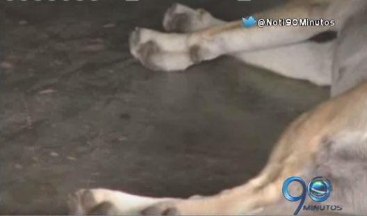 Muerte masiva de perros tiene alarmada a una vereda de Popayán