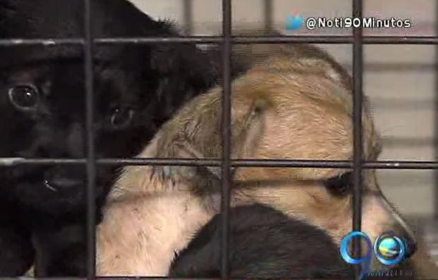 Juez ordena cerrar albergue de animales en el corregimiento Los Andes
