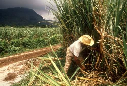 Congresistas y gremios azucareros rechazan reducción de arancel al azúcar