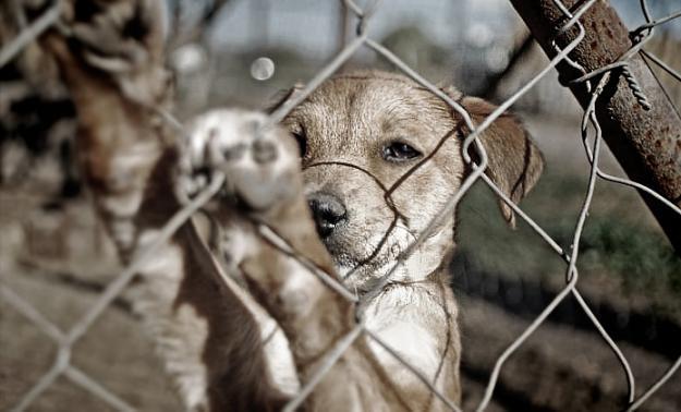 Aberrante caso de violencia contra un perro en Cali produce indignación