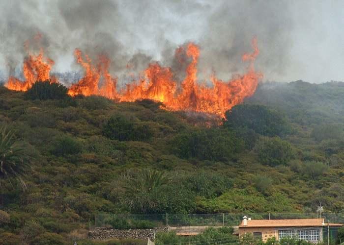 Bomberos atendieron seis incendios forestales durante el lunes