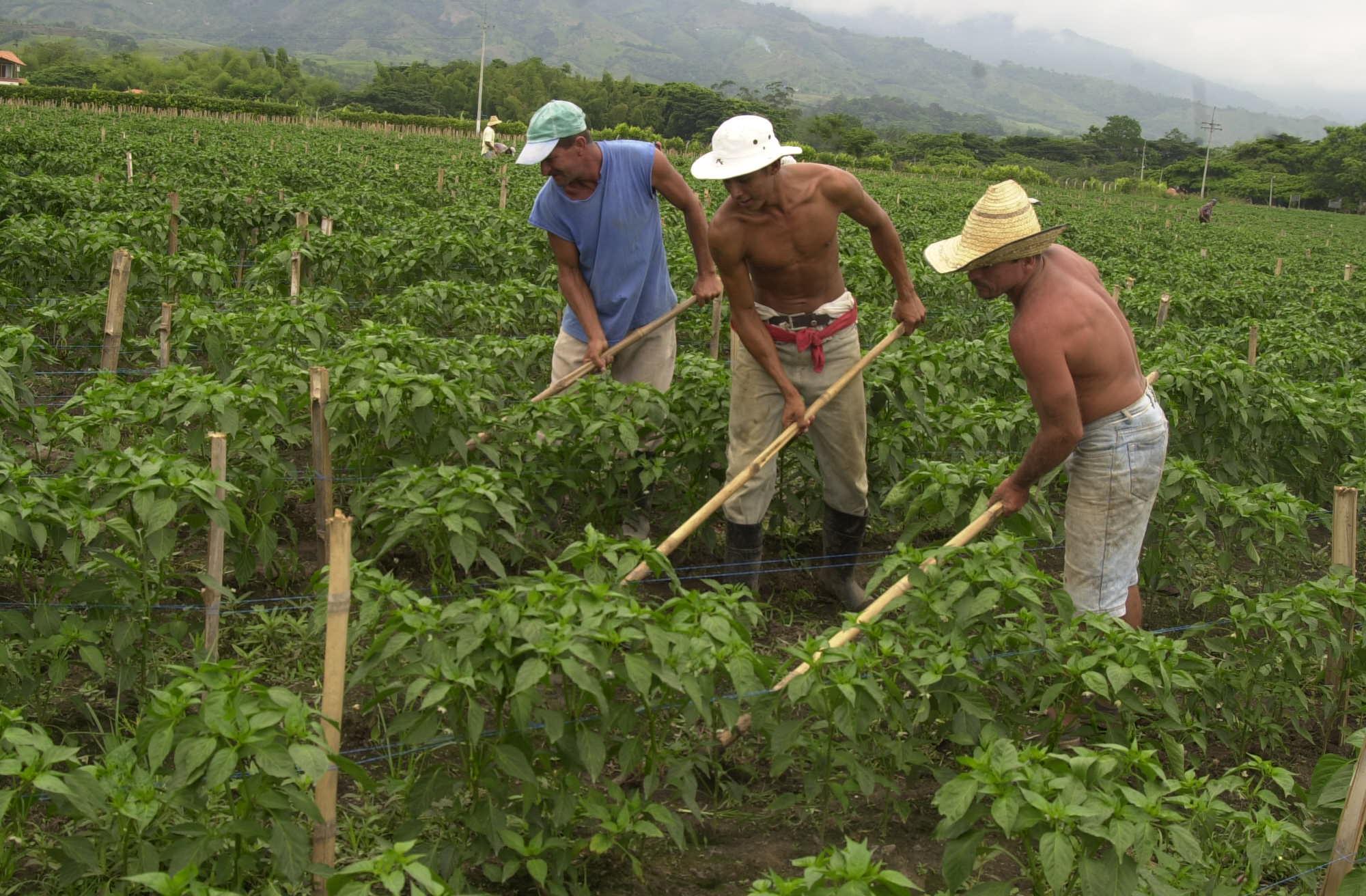 El Valle del Cauca entre las regiones con menos pobreza rural