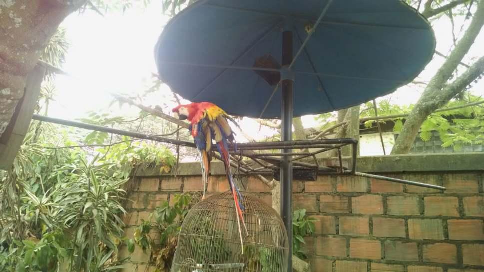 Decomisan tres guacamayas en empresa de Yumbo