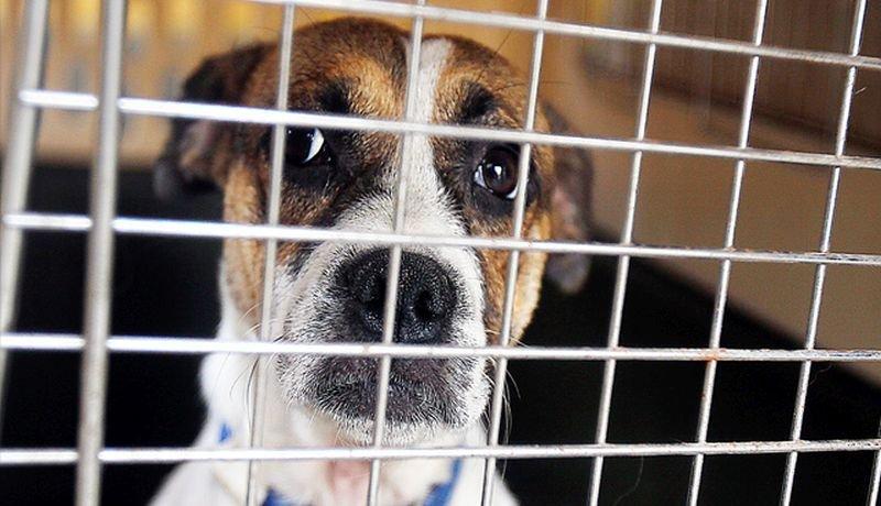 Tras tercer debate, aprueban ley contra el maltrato animal