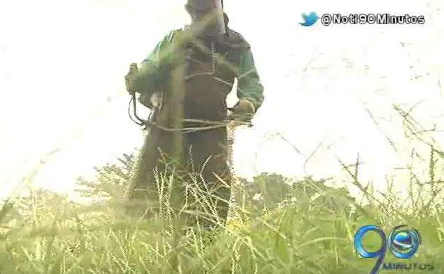 Dagma seguirá al frente del mantenimiento de zonas verdes en 2016