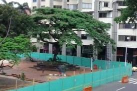 Cali tendrá nueva especie arbórea en conmemoración al Día Mundial del Árbol