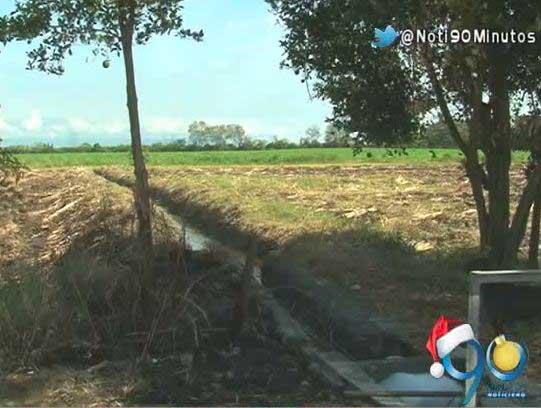 Comunidad de Bocas del Palo pidió a la CVC suspender tala de árboles
