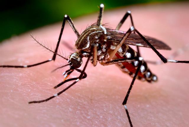 Estos son los barrios de mayor alerta por contagio del zika