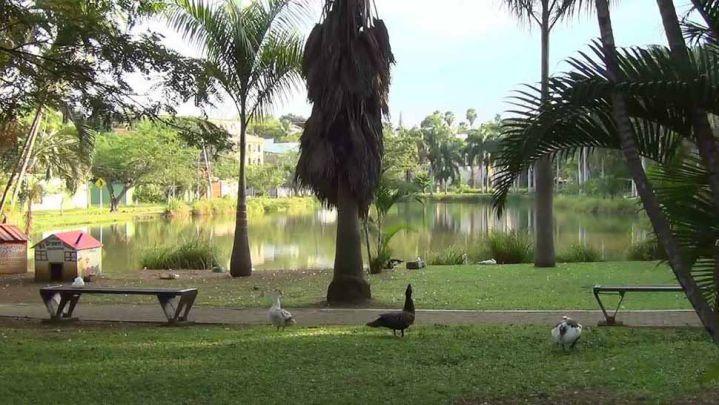 Dagma aseguró que en el lago de Ciudad Jardín hay dos babillas