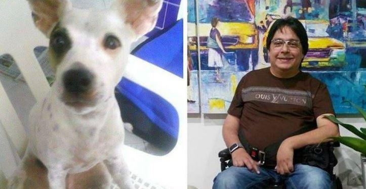 'Jackara' la perra que mordió a un niño no será sacrificada