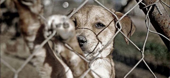 Juan Manuel Santos sancionó ley contra el maltrato animal