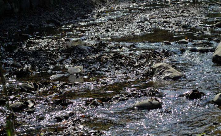 Emcali hará controles en los nacimientos del río Cali